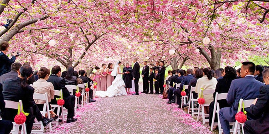 Cherry Blossom Wedding at the Brooklyn Botanic Garden by David Lindner